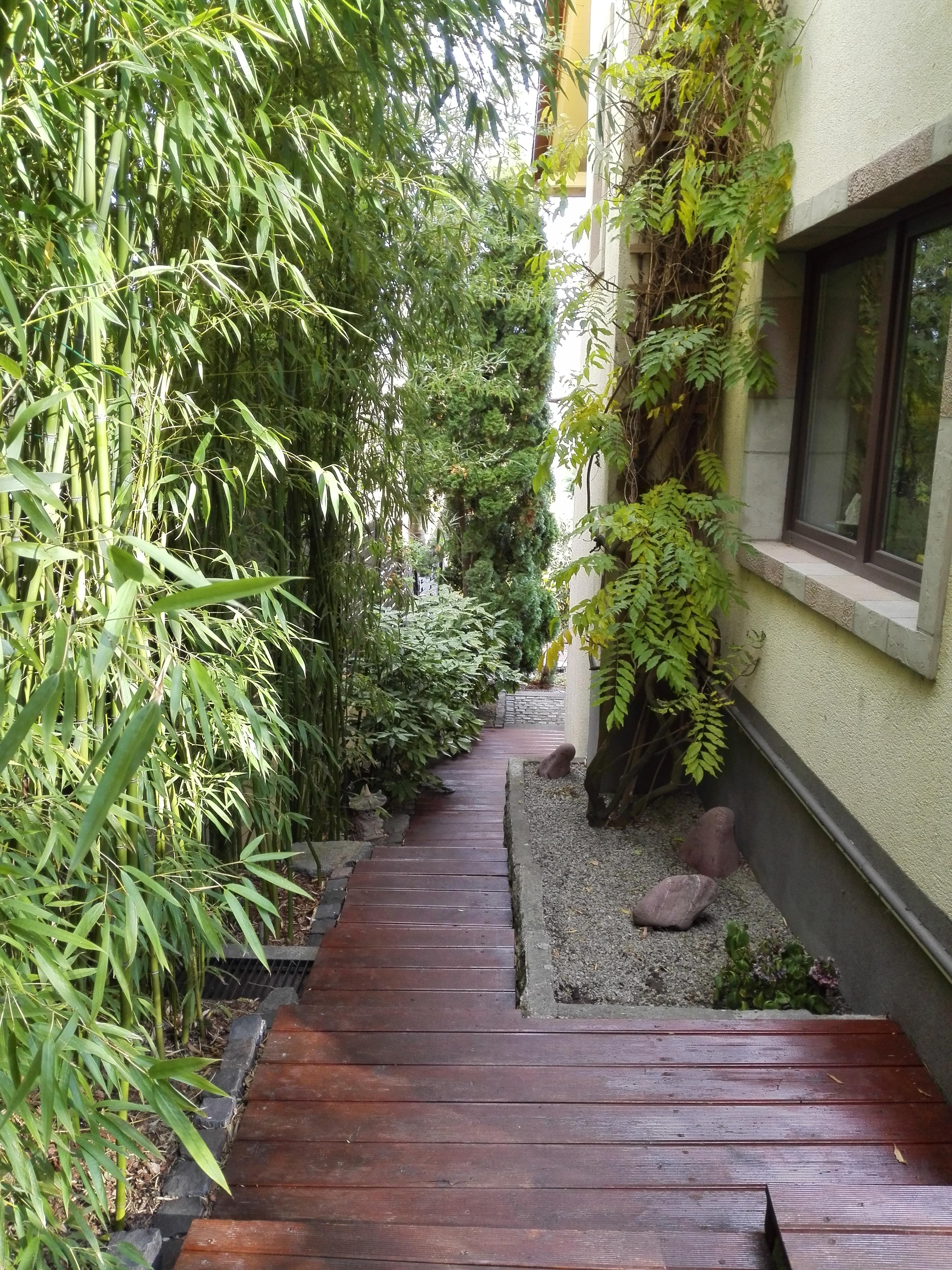 Bambusz ösvény, kerti út