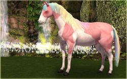 Card Animals Horse