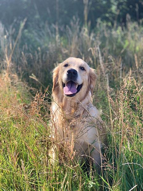 Alton dog walking service hampshire