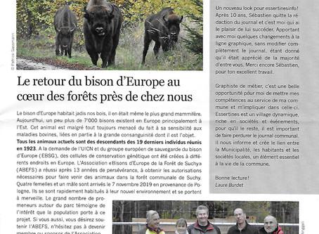 Essertines info : Le retour du bison d'Europe au coeur des forêts près de chez nous