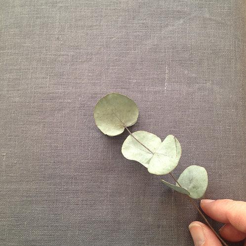 Lin BIO BIRCH x10 cm