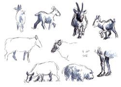 dierendagkrabbels2