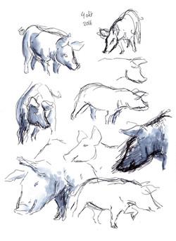 dierendagkrabbels8