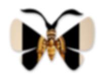 бабочка2.jpg