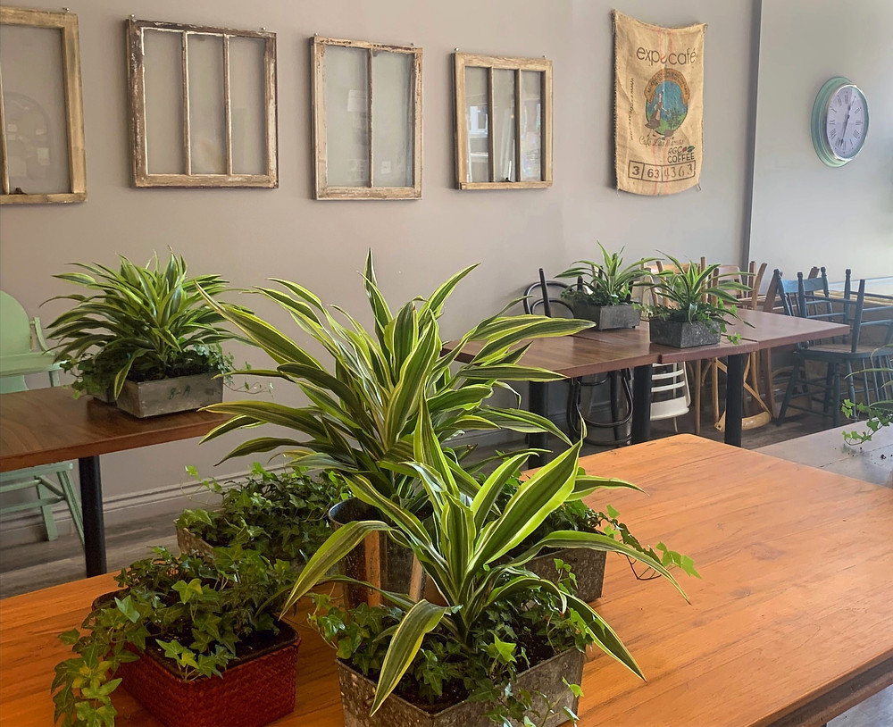 Crosscut Coffee Toronto cozy community cafe with plants and vintage furniture