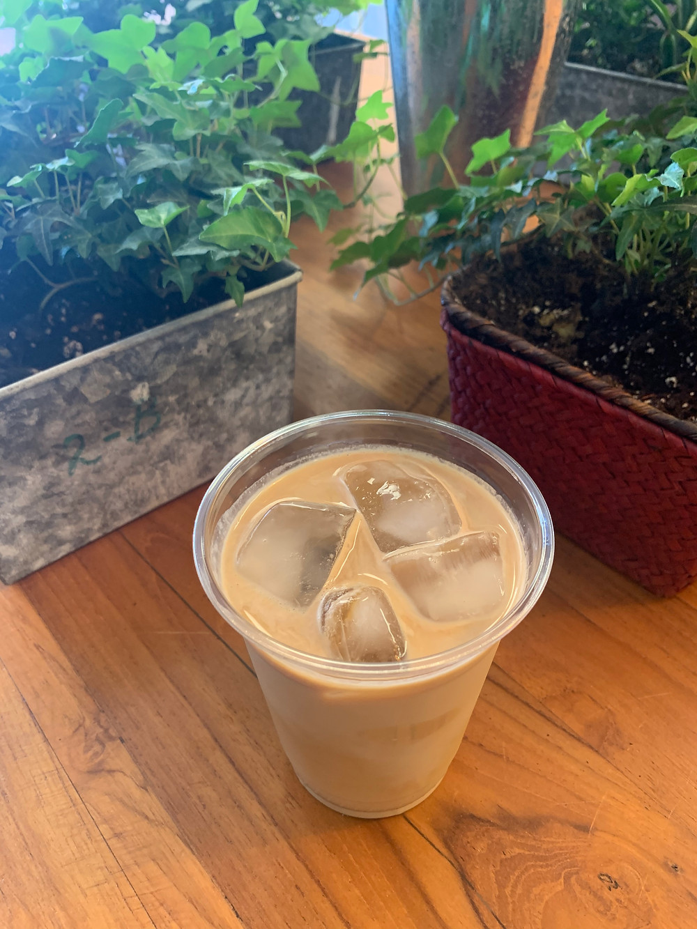 Crosscut Coffee iced latte with plants Toronto cafe not to miss