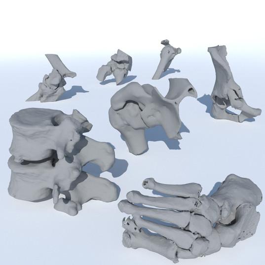 Differentes parties du corps osseux