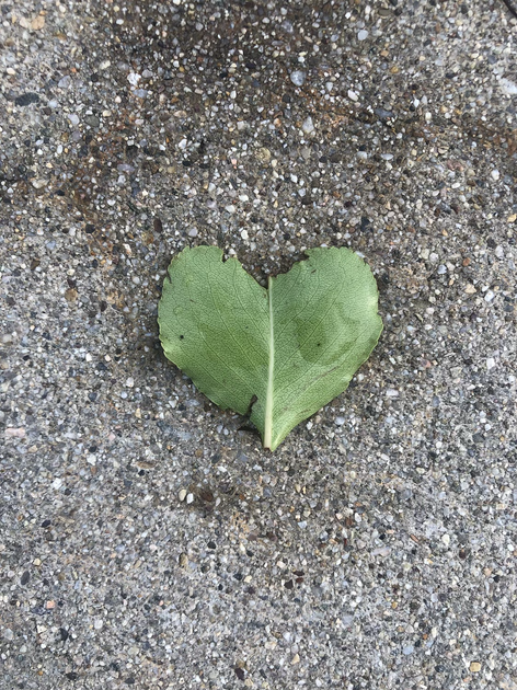 Heart of Leaf