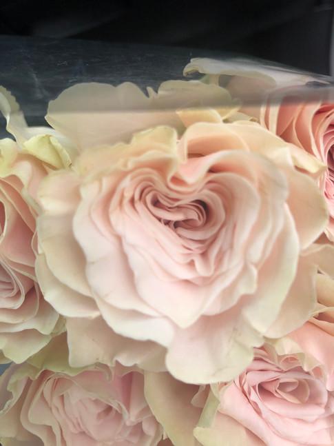 Heart of rose.
