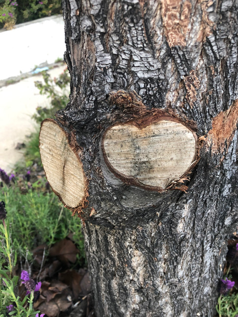 Heart of missing branch.