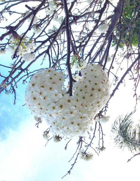 Heart of blooming flowers. Found while taking a walk in my neighborhood on a beautiful spring day.
