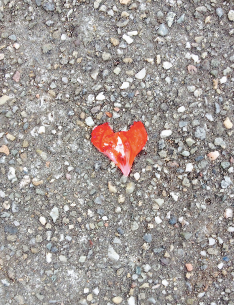Heart of red flower petal. Found this on my trip to Berkeley as I was walking to my friend's graduation ceremony..