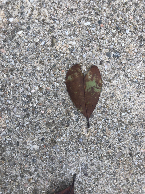 Heart of leaf. I have so many of these, God's easiest way of reminding me that He loves me. Just drop a leaf in front of me <3.