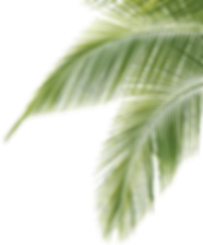 palm-border-png-2.png