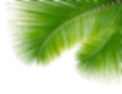 palm-leaf right-png-19 (1).png