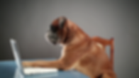videoblocks-boxer-dog-sitting-at-the-cha