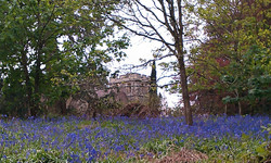 St Stephen's and bluebells1