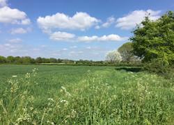 Shapwick fields