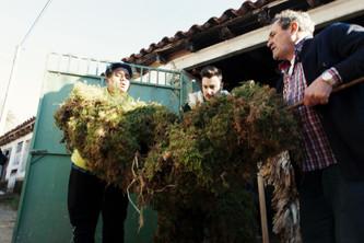 DESCUBRIMOS | La Vijanera en Silió, Cantabria