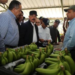 En Valverde, productores de plátano tendrán planta productora de chips de banano.