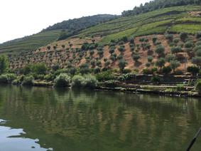 Douro from Pinhau 3.JPG