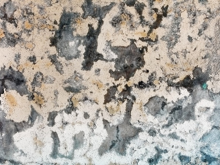 A Brief Introduction to Mold Within Homes and Offices