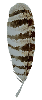 Plume%25204_edited_edited.png
