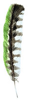 plume 2.png