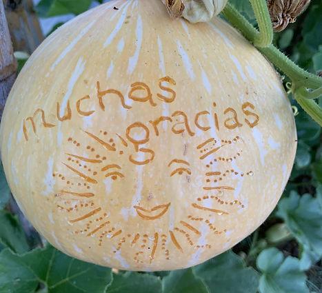 Grateful Potimarrron.jpg