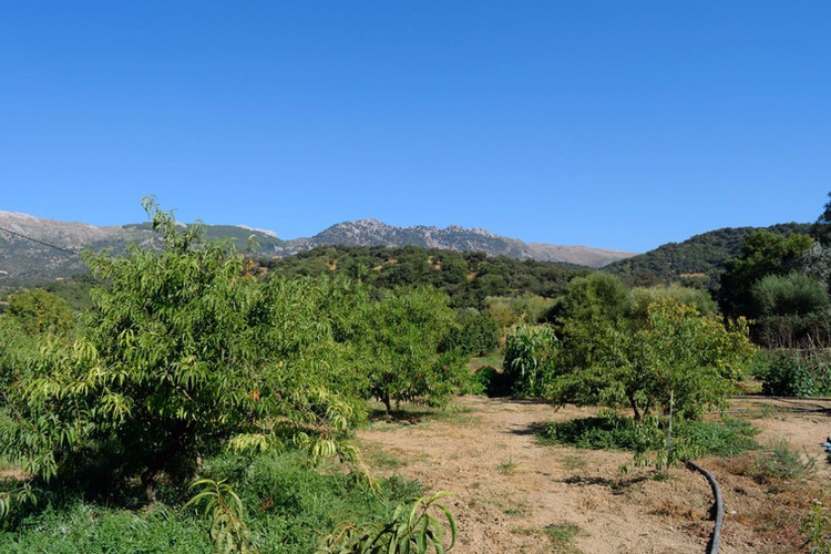 new garden with fruit trees.jpg