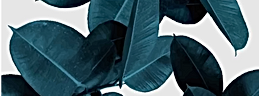 banner-.png