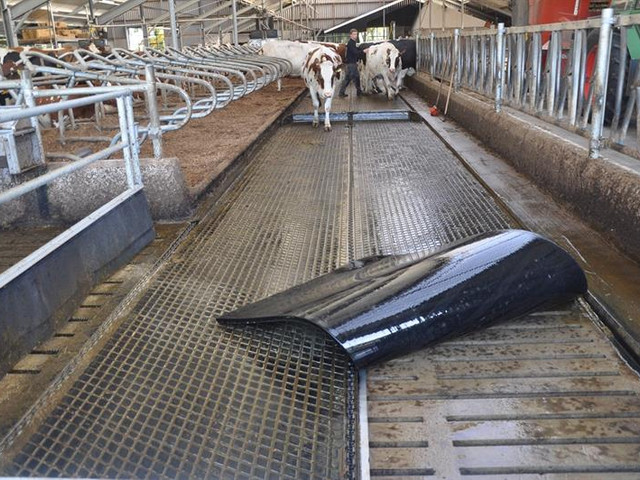dairy-welfare-floor.jpg
