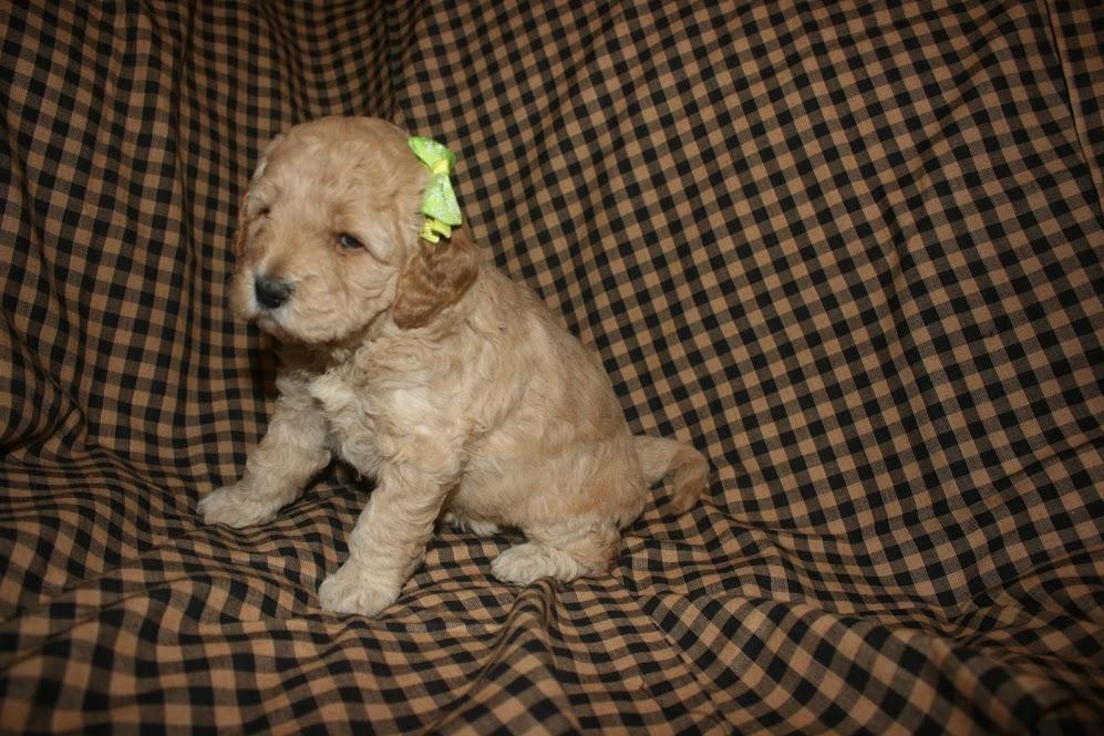 MIss Daisy_4 wks with bandana