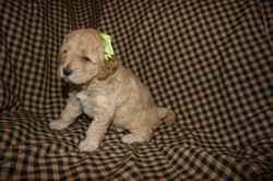 MIss Daisy_4 wks with bandana