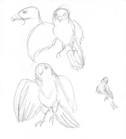 bird study01.jpg