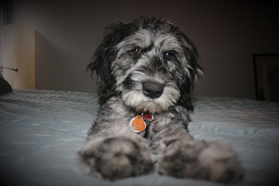 Callie on bed 2 (2).JPG
