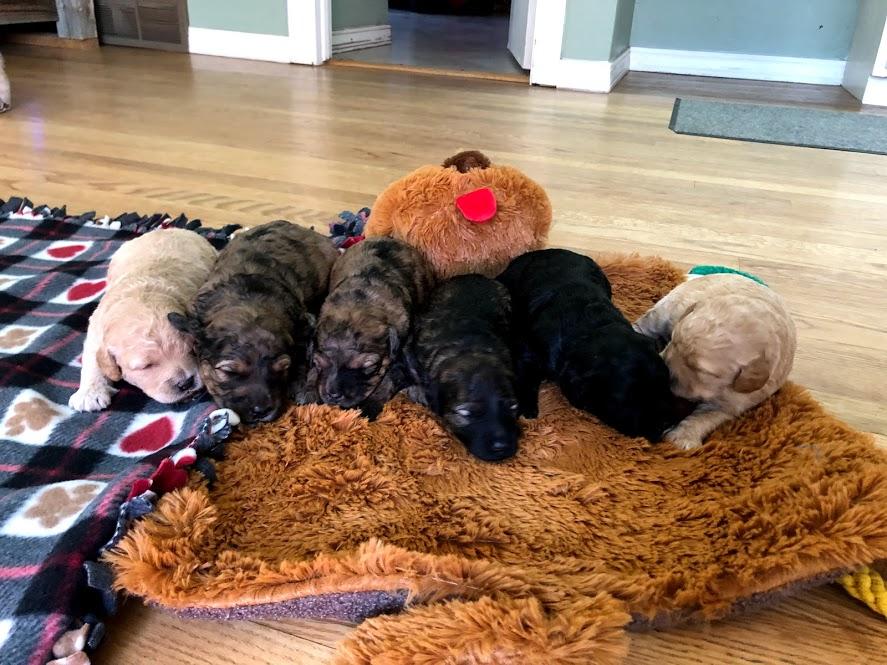 All pups - 2 wks
