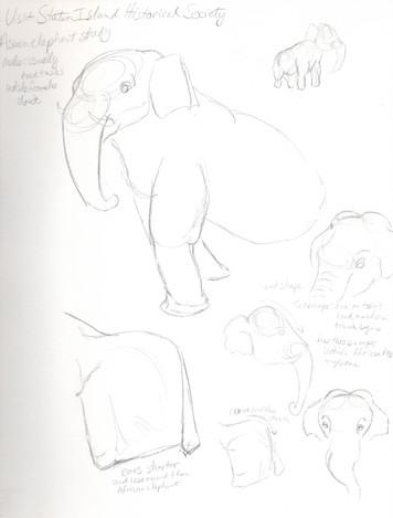 elephant study01.jpg