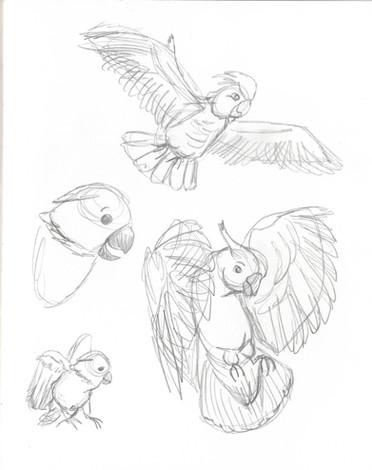 bird study02.jpg