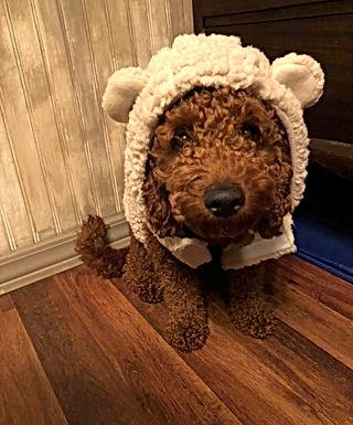 Eli lamb.jpg
