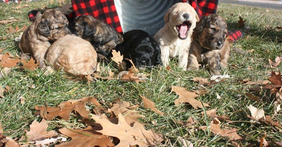 All pups_3 wks