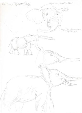 elephant study03.jpg