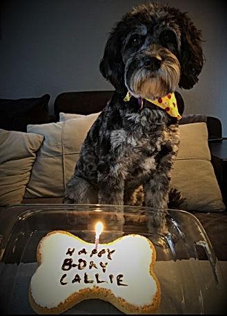 Callie 1 yr bday (2).jpg