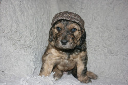 Hank_ 4 wks with hat