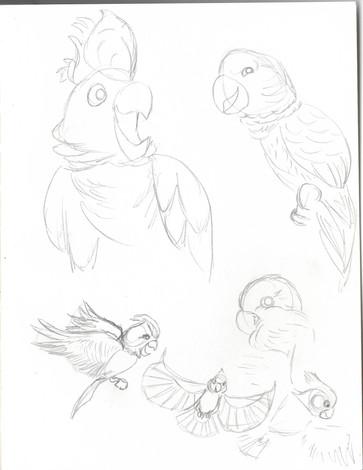 bird study03.jpg