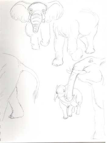 elephant study05.jpg