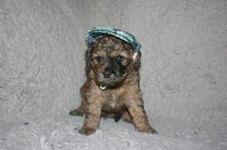 Dobbins_4 wks with hat