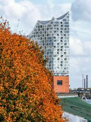 Herbstblätter und die Elbphilharmonie
