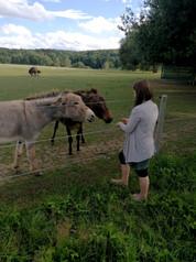 zwei Esel in Tschechien