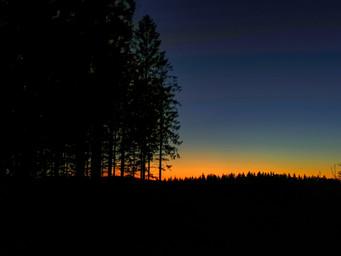 kurz vor der Dunkelheit inmitten der schwedischen Wälder